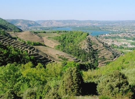 Subtlety rules northern Rhône whites | Vitabella Wine Daily Gossip | Scoop.it