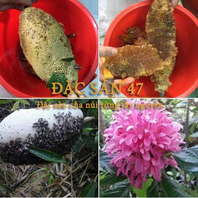 Cách phân biệt mật ong rừng và mật ong nuôi | Thủ thuật mẹo vặt hay | Scoop.it