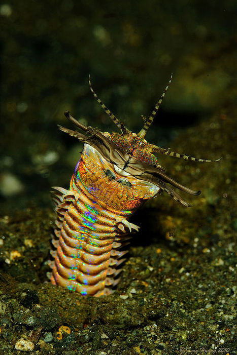 Absurd Creature of the Week: 10-Foot Bobbit Worm Is the Ocean's Most Disturbing Predator | Science | WIRED | All about water, the oceans, environmental issues | Scoop.it