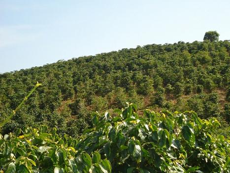 The Tea Branches of Serendip | Tea | Scoop.it