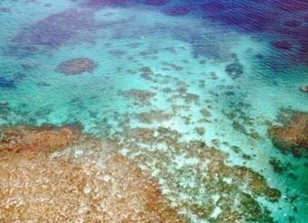 La Grande Barrière de Corail risque de perdre son statut de patrimoine mondial | H2O | Scoop.it