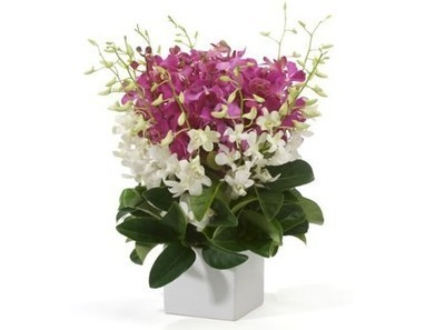 Orchids In Pot | 12 Red Roses N 2kg Fruit Basket | Scoop.it