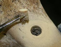 DNA's half-life identified using fossil bones - life - 10 October 2012 - New Scientist   Science Matters   Scoop.it