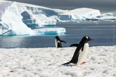 il y a 10 ans, j'embarquais pour l'#Antarctique et la #Patagonie | Hurtigruten Arctique Antarctique | Scoop.it