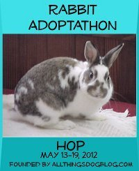 The Rabbit Adoptathon- Help Promote the Adoption of Homeless Rabbits | Pet News | Scoop.it