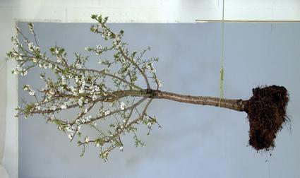 Exposition : L'arbre de vie | L'Etablisienne, un atelier pour créer, fabriquer, rénover, personnaliser... | Scoop.it