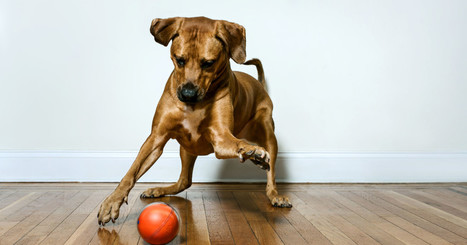 PlayDate: Worlds First Pet Camera in a Smart Ball | Cool Companies, Products & Services | Scoop.it