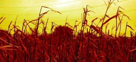 Climate change will reduce crop yields sooner than we thought - University of Leeds   Wheat   Scoop.it