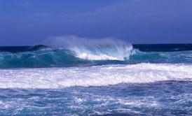 Les dossiers sur l'Océan | Nausicaa | La passion de la mer : protection des espèces, littérature, blue society | Scoop.it