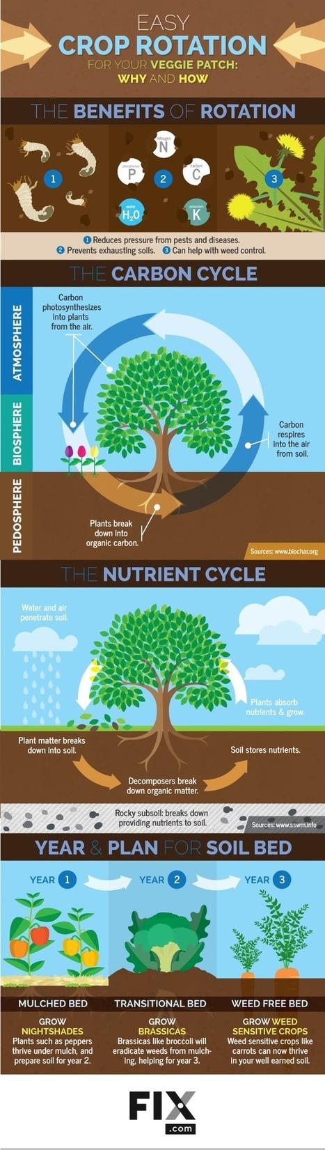 Easy Crop Rotation for Your Garden | Gardening | Scoop.it