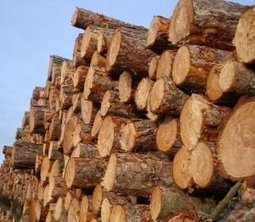 Pesquisa mostra o impacto da madeira extraída da Amazônia | Science, Technology and Society | Scoop.it