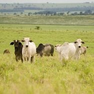 Beef brands slow to move on deforestation | Innovation Forum | Responsible Sourcing | Scoop.it