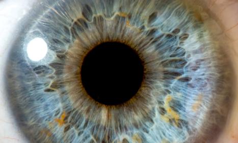 Eyes are 500 million years old (ScienceAlert) | Salud Visual 2.0 | Scoop.it