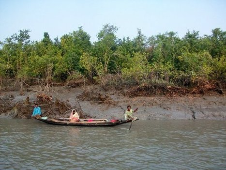 Mangrove forests threatened by Climate Change in the Sundarbans of Bangladesh and India : Indybay | Earth Citizens Perspective | Scoop.it