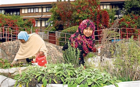 Gardening Against the Odds 2012: The winners' stories  - Telegraph | Container Gardening | Scoop.it