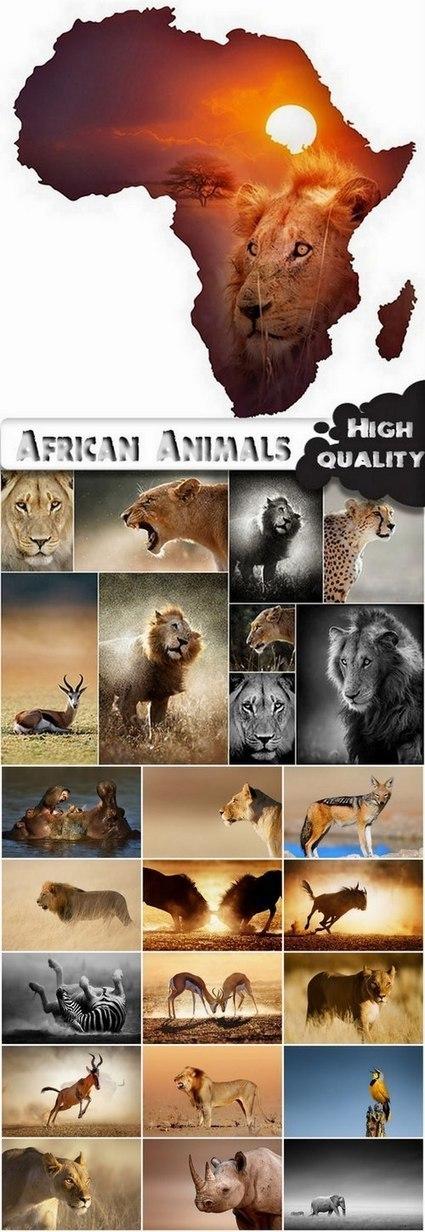 Amazing African Animals Stock Images - 25 HQ Jpg | DesignFeed | Scoop.it