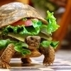 Man tries to smuggle turtle onto plane by hiding it in a hamburger   Brainfriendly, motivating stuff for ESL EFL learners   Scoop.it