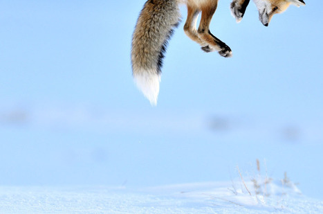 Wildlife Photographer of the Year 2012 | Outdoor Education! | Scoop.it