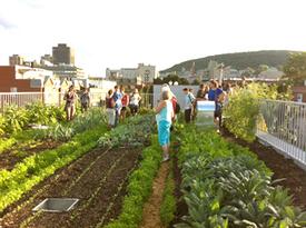 Des places se libèrent!!! École d'agriculture urbaine - du 12 au 16 août 2013 | Agriculture du XXI siècle, adaptation et atténuation | Scoop.it