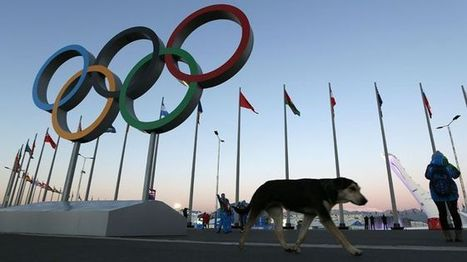 Russian billionaire's dog shelter offers Sochi strays a second chance | Xposed | Scoop.it