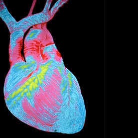 Heart Cells Can Be Coaxed to Regenerate at Low Rates | Quirky (with a dash of genius)! | Scoop.it