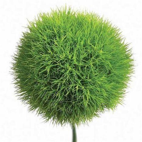 original.aspx (600x600 pixels) | Botany Whimsy | Scoop.it