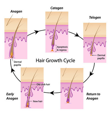 Best Hair Loss Treatment Products, Hair Loss Products | AllDayChemist | pharmaceutical companies in india | Scoop.it