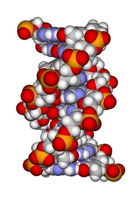 Genética y medicina: el derecho a saber… y el derecho a no saber | Miradas en Bioética | Scoop.it