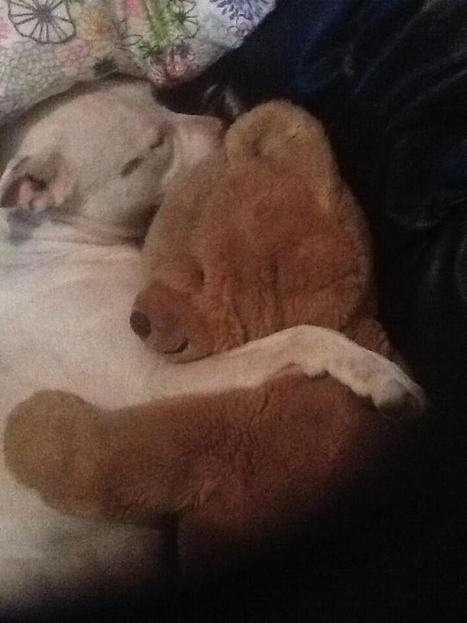 Twitter / casehuds: @alexw708 cute aw! Mine don't ... | Cute Teddy Bears & Stuffed Animals | Scoop.it