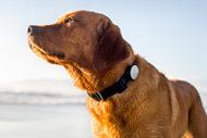 Nestle Purina to buy pet adoption site Petfinder | Pets Market @ a glance | Scoop.it
