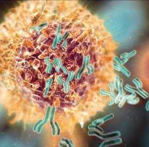 Best Selling Monoclonal Antibodies 2013 | Immunology and Biotherapies | Scoop.it