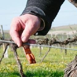Le vignoble du Val de Loire teste la confusion sexuelle pour ... - FrequenceTerre.com | AOC Chinon et Vins de loire | Scoop.it