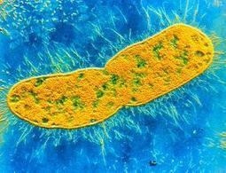 Antibiotic-resistant superbugs now a global epidemic - health - 30 April 2014 - New Scientist | Test | Scoop.it