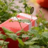 A boire ! Les plantes tweetent quand elles ont soif | Web et HighTech | Scoop.it