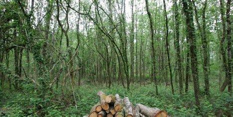 Un massif forestier très convoité   Emploi formation   Scoop.it