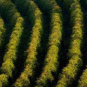 Au Brésil, la sécheresse menace la production de café | Le  Brésil : des inégalités qui persistent et qui  freinent l'essor d'une BRICS | Scoop.it