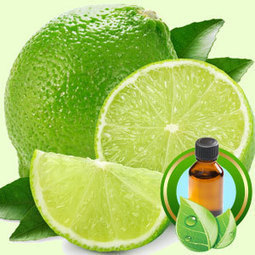 Lime Distilled ESSENTIAL OIL | Essential-Oils | Scoop.it