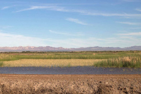 Habitat Restoration Kicks Off at Salton Sea - KCET | Fish Habitat | Scoop.it