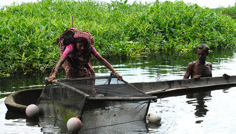 Chinese know-how to spur cage fish farming in Uganda - SciDev.Net | Seafood | Scoop.it
