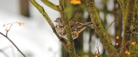Top tips to help winter wildlife | Gloucestershire Wildlife Trust | wildlife | Scoop.it