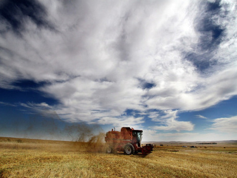 Global farmland offers potential for asset deals | Timberland Investment | Scoop.it
