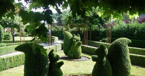 Tout savoir sur l'art topiaire et la sculpture végétale | Bouche à Oreille | Scoop.it