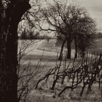 Food Art: Vineyards in B&W 3, food photography by Rosa Mayland | The Rambling Epicure | The Rambling Epicure | Scoop.it