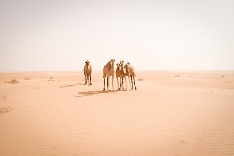 Leica – A Journey Through the Sahara | Jody MacDonald | Leica M & Leica Q | Scoop.it