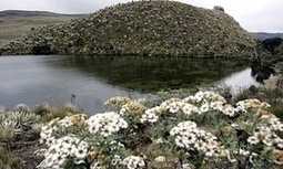 Colombian court bans oil, gas and mining operations in paramos | Permaculture, renewables, and sustainability | Scoop.it