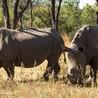 Endangered Species News