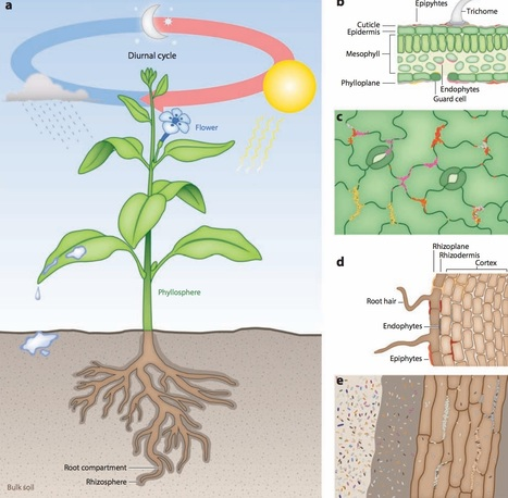 The Plant Microbiota: Systems-Level Insights and Perspectives - Annual Review of Genetics, 50(1): | Emerging Research in Plant Cell Biology | Scoop.it