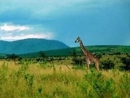 Le tourisme équitable en Afrique subsaharienne, un outil efficace de ... | ECONOMIES LOCALES VIVANTES | Scoop.it