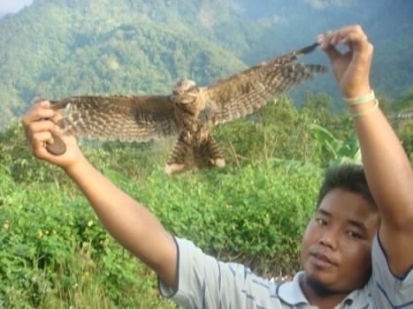 The Mind-Boggling Bird Suicide Phenomenon of Jatinga   Strange days indeed...   Scoop.it