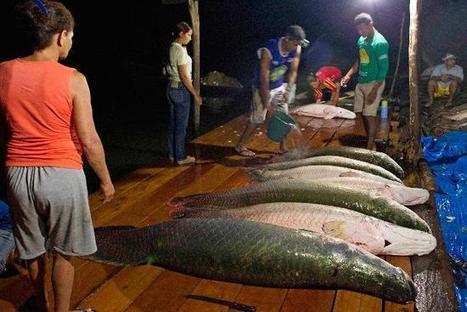 Villagers from Medio Jurua nature reserve of Brazil's Amazon rainforest arrive ... - Reuters AlertNet | Southern Hemisphere | Scoop.it